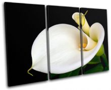 Calla Lily Flowers Floral - 13-1105(00B)-TR32-LO